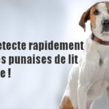 Un chien pour détecter les punaises de lit