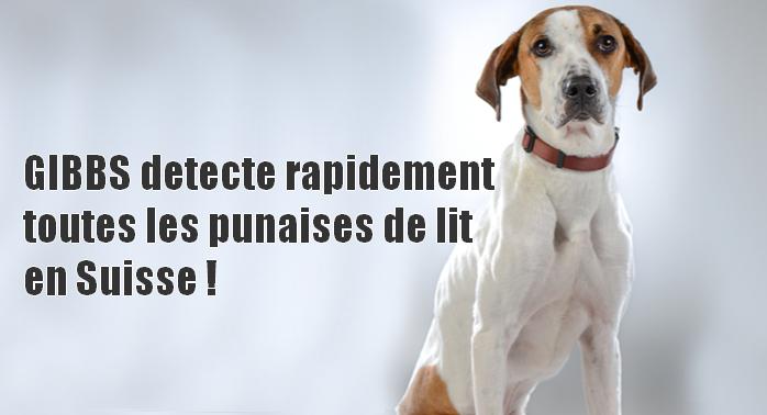 detection canine pour punaises de lit en suisse
